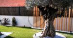 diseño jardin tiana